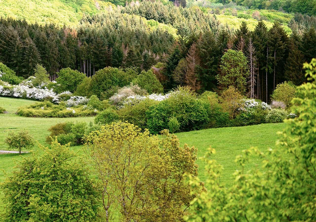 zum-alten-wirt-umgebung-mischwald